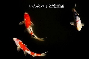 鯉する登竜門